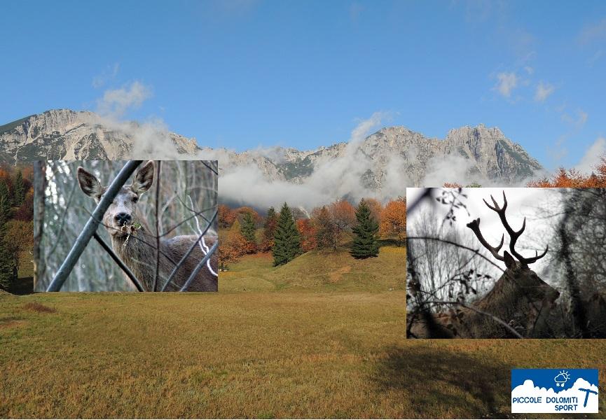 cervo delle Piccole Dolomiti