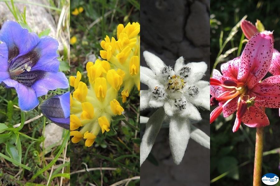 fiori delle Piccole Dolomiti
